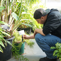 student checking plant in conservatory