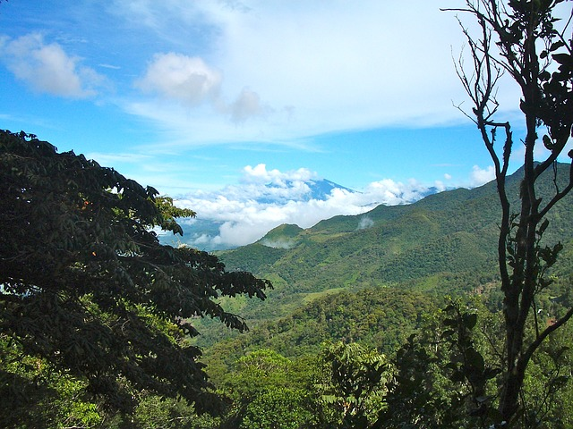 Panama Cloud Forest